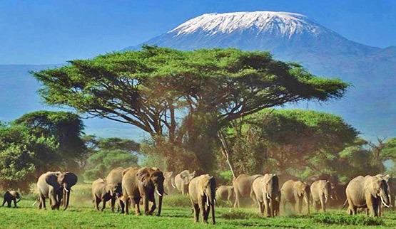 viaje-de-novios-safari-kenya