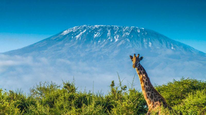 luina-de-miel-africa-kilimanjaro