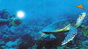 luna-de-miel-seychelles-buceo