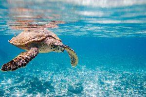 luna-de-miel-seychelles-tortugas-gigantes