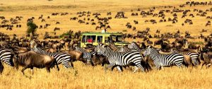 luna-de-miel-tanzania-serengeti